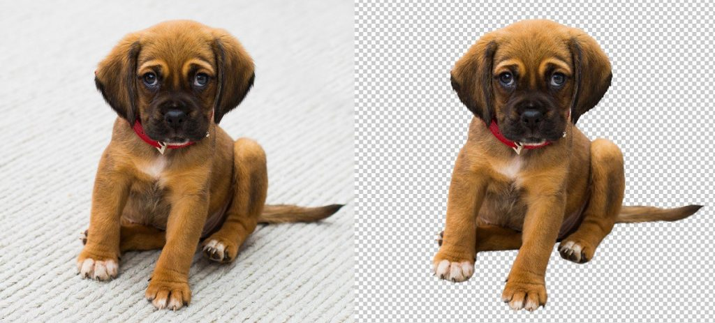 Dog Photo Editing Services